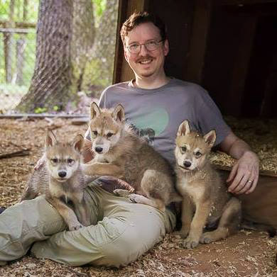 Jay-wolf-pups